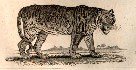 poetry analysis the tyger by william blake