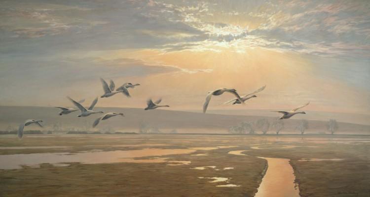 422_bewicks-swans_1000