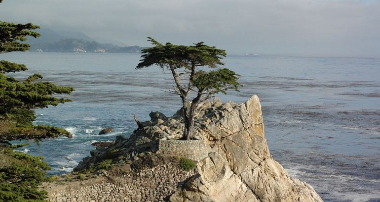 Lone Cypress Pebble Beach And Other